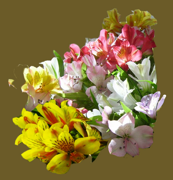 Сиреневые цветы значение